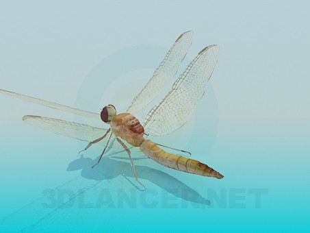3d model Dragonfly - preview