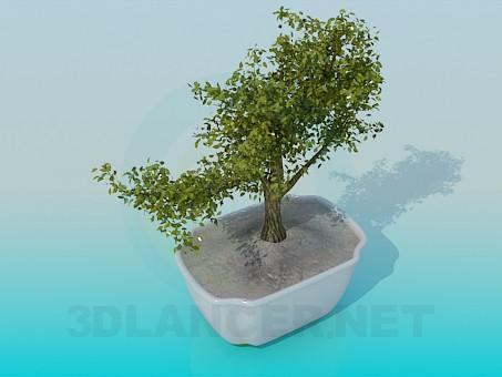 3d model Decorative mini tree - preview