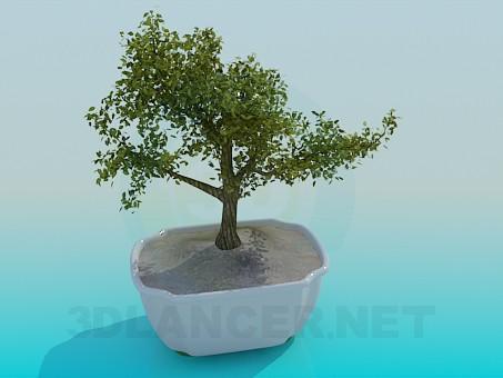 3d модель Декоративное мини-дерево – превью