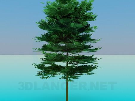 3D modeli Kalın ağaç - önizleme