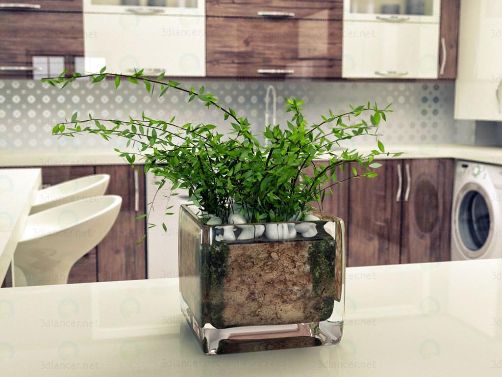 Zimmerpflanze 3D-Modell kaufen - Rendern