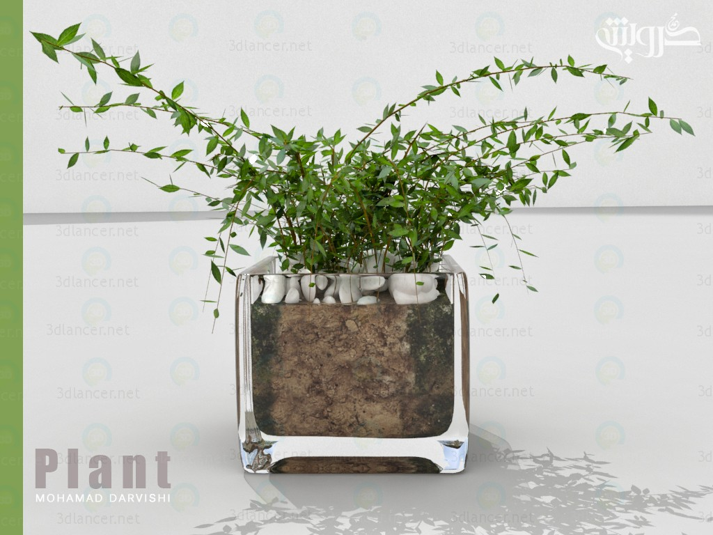 Planta de interior 3D modelo Compro - render