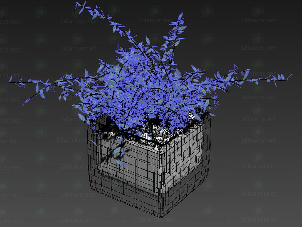 3d  Houseplant  model buy - render