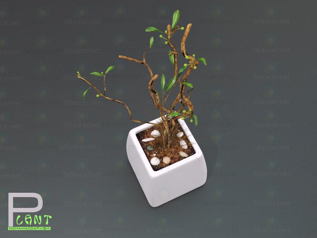3d Комнатное растение модель купить - ракурс