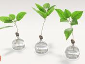 Vases with plants.