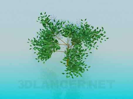 3d model Low tree - preview