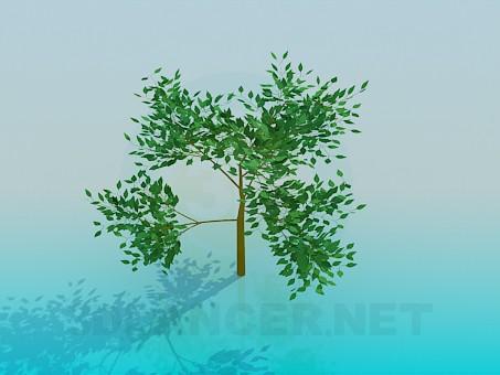modelo 3D Árbol bajo - escuchar