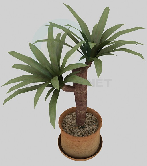3d model Palm - preview