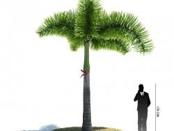 Пальма Desert