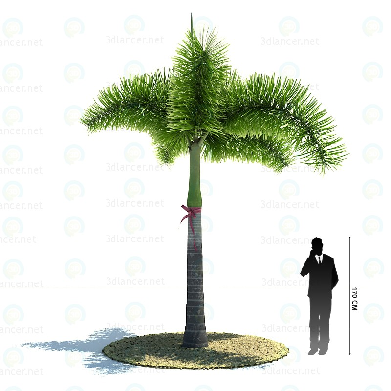 3d modeling Desert Palm model free download