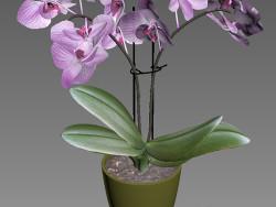 Orquidea 3d modeli