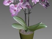 Orquidea 3d model