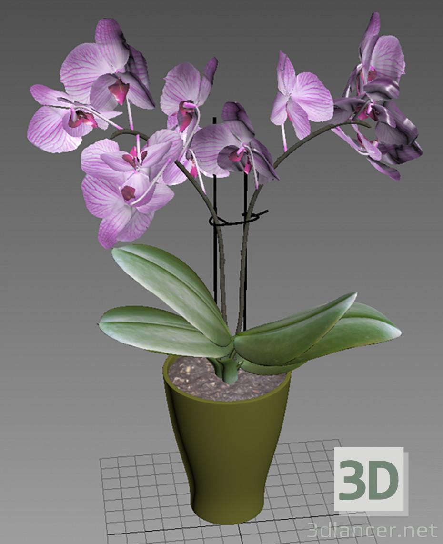 3d model Orquidea 3d model - vista previa