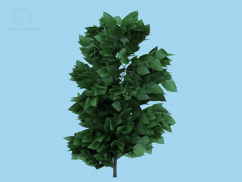 3D Modell Baum - Vorschau