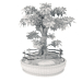 3d Bonsai tree model buy - render