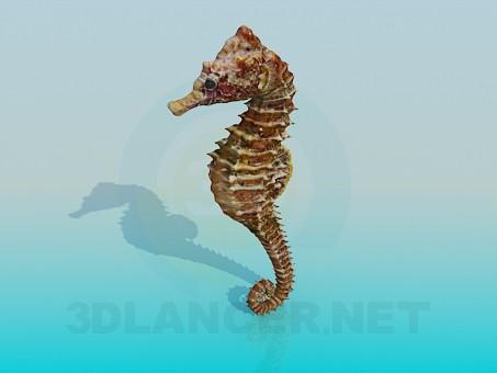 3d модель Морской конек – превью