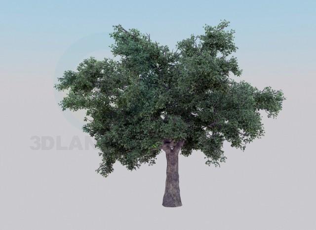 modelo 3D Árbol de roble - escuchar