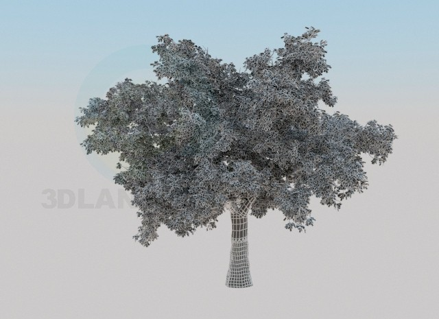 3d model Oak-tree - preview