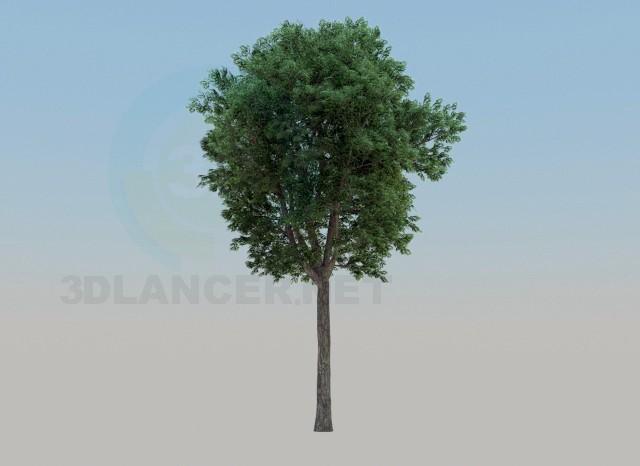3d modeling ash-tree model free download