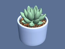 Succulent in a pot.