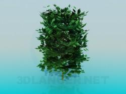 Yemyeşil bush