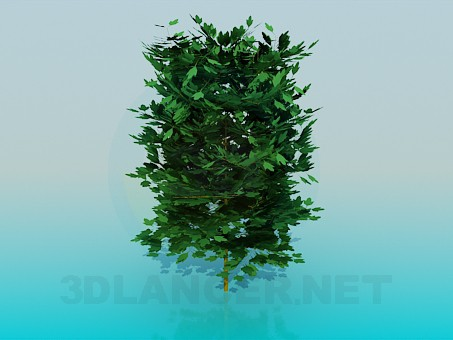 3d model Lush bush - preview