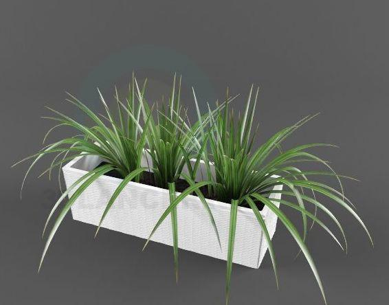 descarga gratuita de 3D modelado modelo Dracaena
