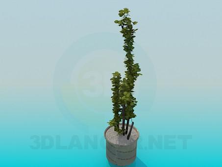 3d model Pot - preview