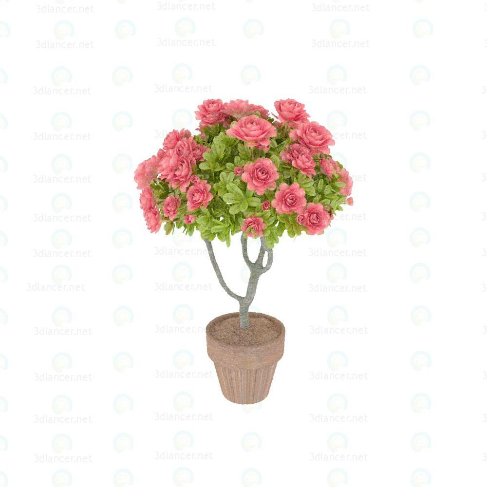dcff461e1 3d model Azalea tree, max(2014), - Free Download | 3dlancer.net