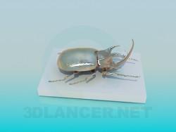 Gift beetle