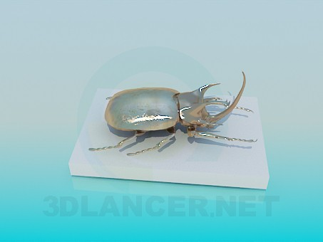 3d modeling Gift beetle model free download