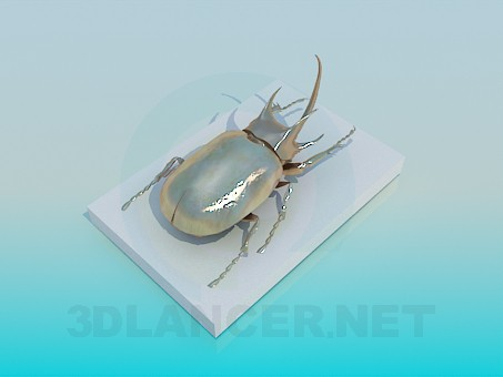 3d model Gift beetle - preview