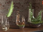 Plant terrarium. SET # 3