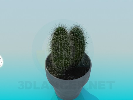 3d model Cactus - preview