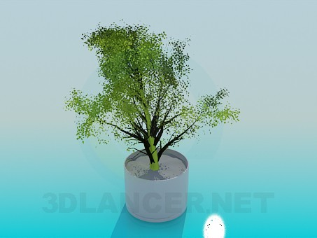 3d model Shrub in a pot - preview