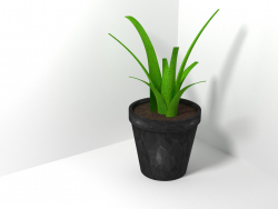 The plant in a pot