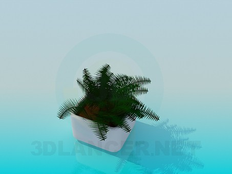 3d modeling Fern in a pot model free download