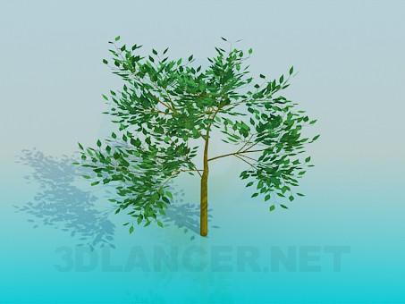 3d модель Дерево – превью