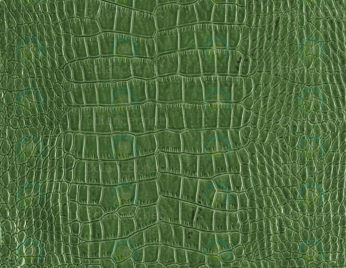 Descarga gratuita de textura piel de reptil - imagen