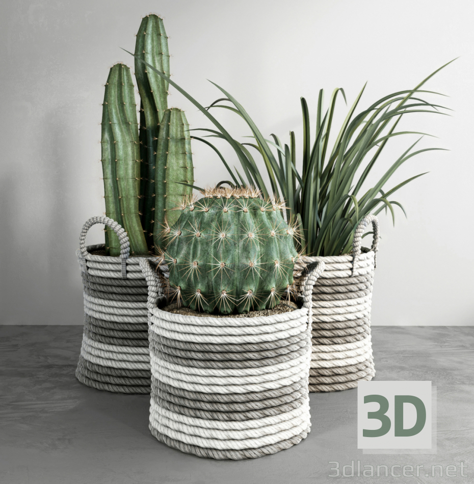 3d model Cacti - preview