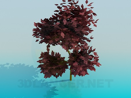 3d model Tree with red leaves - preview