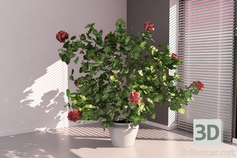 3d Hibiscus model buy - render