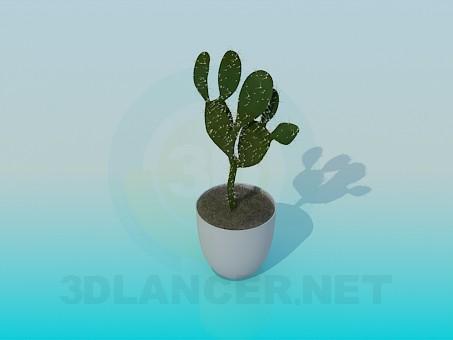descarga gratuita de 3D modelado modelo Cactus