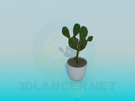 3d model Cactus - preview