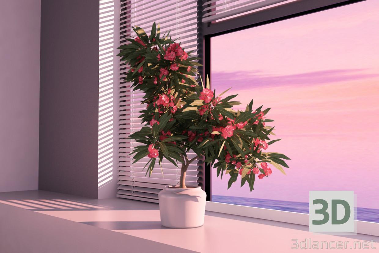 олеандр квітучий 3d модель купити - рендер