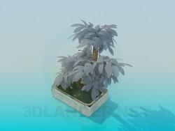 Mini árbol