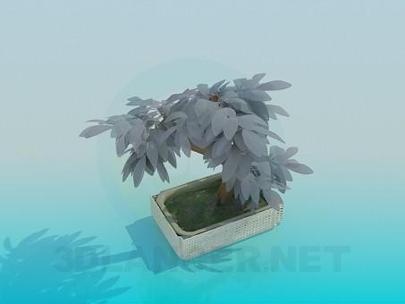 3d model Mini tree - preview