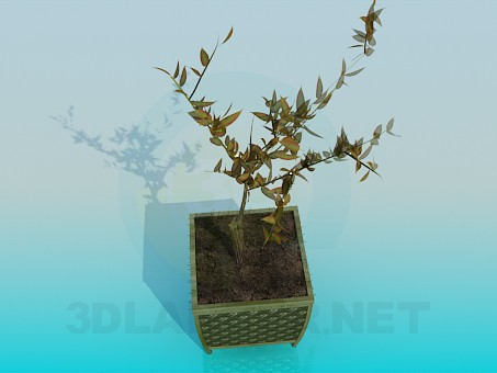 modelo 3D La planta en una maceta - escuchar