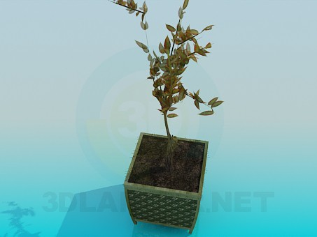 3d model The plant in a pot - preview