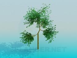 छोटे पेड़